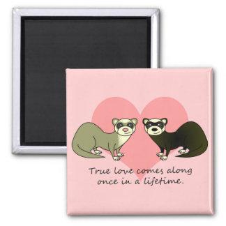 Cute Ferrets True Love 2 Inch Square Magnet