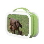 Cute Field Spaniel Lunchbox