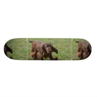 Cute Field Spaniel Skate Board Deck