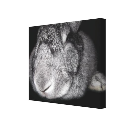 Cute Flemish Giant Nose Close-Up Gallery Wrapped Canvas