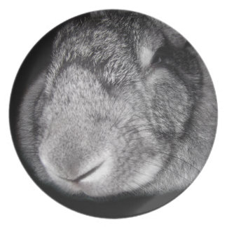 Cute Flemish Giant Nose Close-Up Dinner Plate
