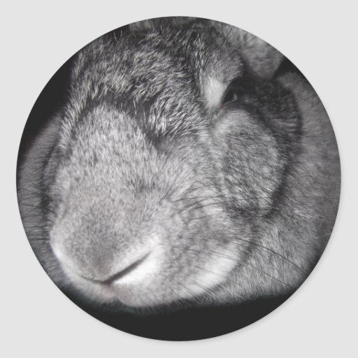 Cute Flemish Giant Nose Close-Up Stickers