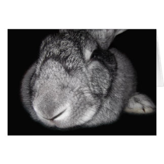 Cute Flemish Giant Some Bunny Loves You! Card