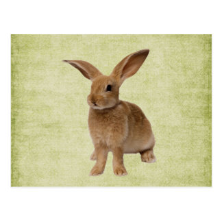 Cute Floppy Bunny-  Postcard