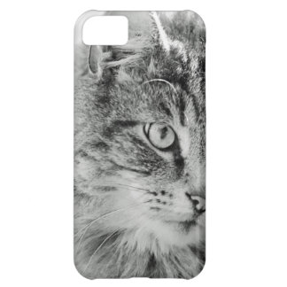 Cute Fluffy Cat Face Cover For iPhone 5C