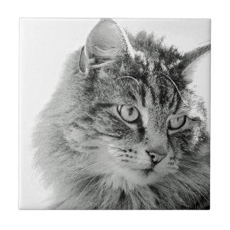 Cute Fluffy Cat Face Ceramic Tiles