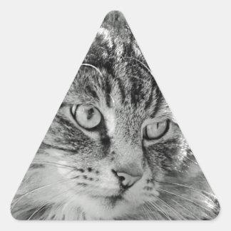 Cute Fluffy Cat Face Triangle Sticker