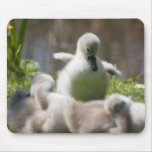 Cute fluffy cygnet baby swan mousepad,  gift mouse pad