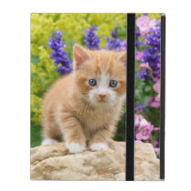 Cute Fluffy Ginger Baby Cat Kitten Flowers Photo - iPad Folio Case