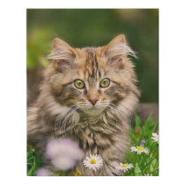 Cute Fluffy Maine Coon Kitten Cat in Flowers Photo Faux Canvas Print