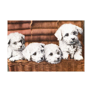 cute fluffy puppies canvas print