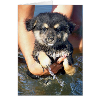 Cute Fluffy Puppy Dog Photograph Card