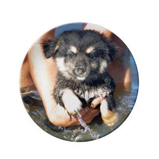 Cute Fluffy Puppy Dog Photograph Dinner Plate