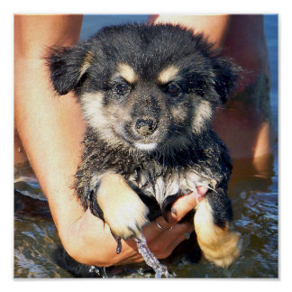 Cute Fluffy Puppy Dog Photograph Poster