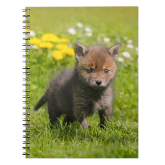 Cute Fluffy Red Fox Cub Baby Animal, Photocover Notebook