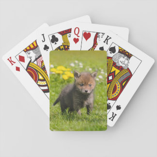 Cute Fluffy Red Fox Cub Wild Baby Animal, Playing Playing Cards