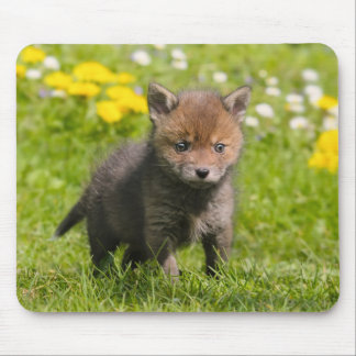 Cute Fluffy Red Fox Cub Wild Baby Animal, Supply Mouse Pad