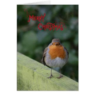 Cute fluffy Robin Christmas Card