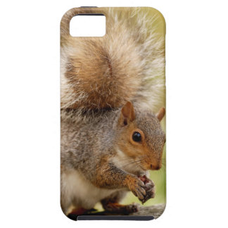 Cute Fluffy Squirrel iPhone SE/5/5s Case