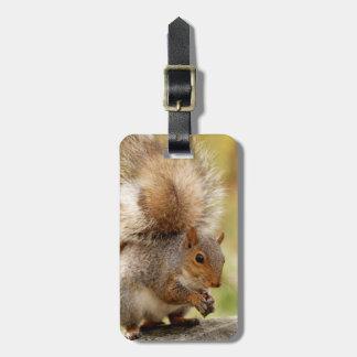 Cute Fluffy Squirrel Travel Bag Tags
