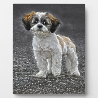 Cute Fluffy Toy Dog Puppy Display Plaque
