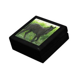 Cute Foal Gift Box