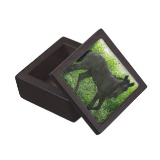 Cute Foal Premium Gift Box