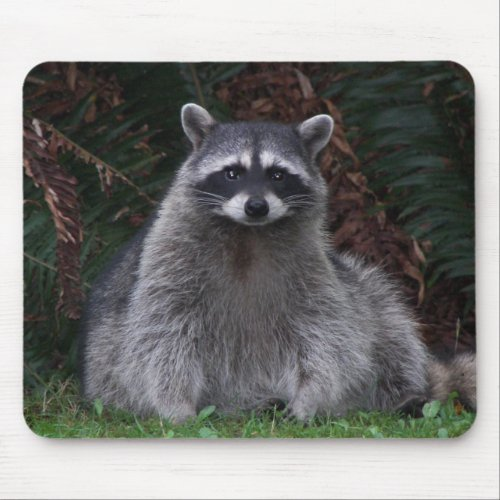 Cute Forest Raccoon Photo Mouse Pad