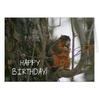 Cute Fox Squirrel - Happy Birthday! Card