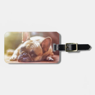 Cute French Bulldog Face, Lying Down Luggage Tag