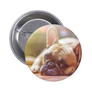 Cute French Bulldog Face, Lying Down Pinback Button