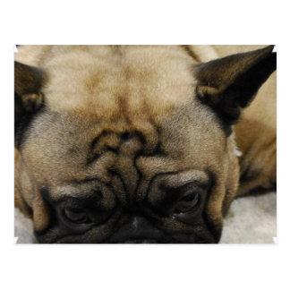 Cute French Bulldog Postcard