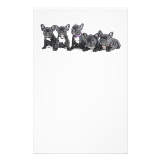 Cute French Bulldog Puppies Flyer