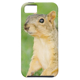 Cute Friendly Squirrel Wild Animal Photography iPhone SE/5/5s Case