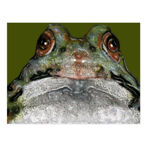 Cute Frog, Close Up: Art: Color Pencil Postcard