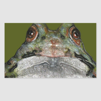 Cute Frog, Close Up: Art: Color Pencil Rectangular Sticker