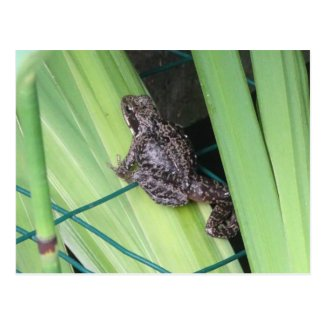 Cute Frog DIY Postcard