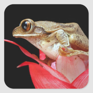 Cute frog on red flower photo stickers, sticker