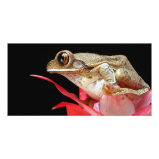 Cute frog perched on red flower photo card