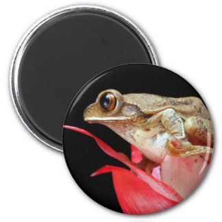 Cute frog perched on red flower photo magnet