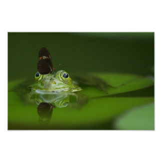 Cute frog with a Butterfly on his nose Poster