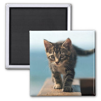 cute_funny_animals_23 KITTEN CAT ADORABLE BABY Magnet