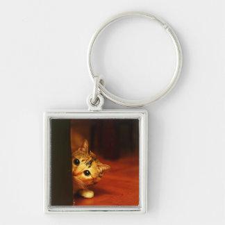 cute_funny_animals_28 kitten cat sneaking peering keychain