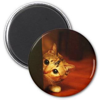 cute_funny_animals_28 kitten cat sneaking peering magnet