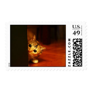 cute_funny_animals_28 kitten cat sneaking peering postage