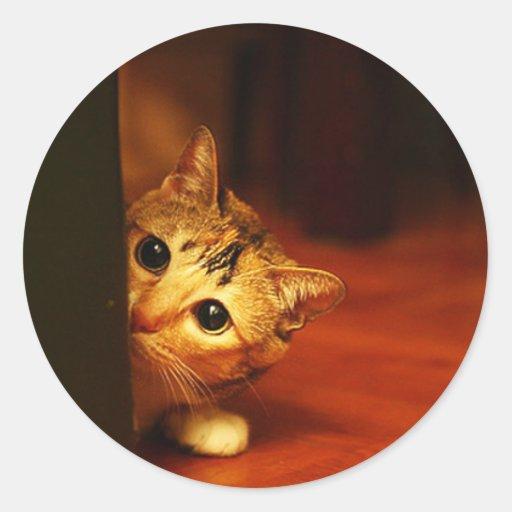 cute_funny_animals_28 kitten cat sneaking peering sticker