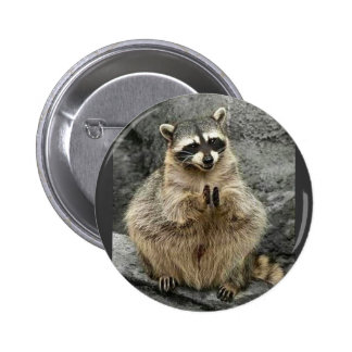 cute_funny_animals_35 RACCOON Praying Sitting Button
