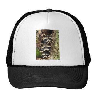 cute_funny_animals_41 Three Raccons Tree trunk Hat