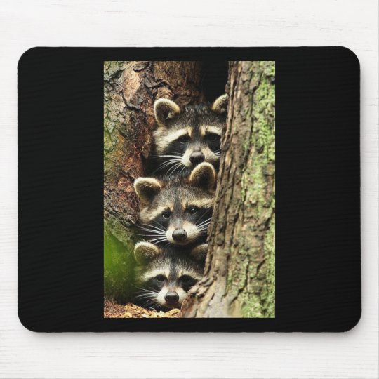 cute_funny_animals_41 Three Raccons Tree trunk Mouse Pad