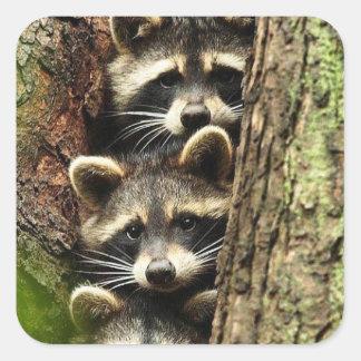 cute_funny_animals_41 Three Raccons Tree trunk Square Sticker